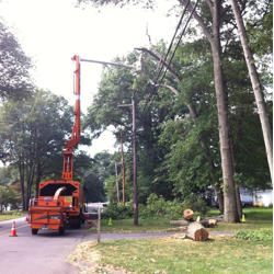 A tree crew works to manage vegetation along overhead power lines.