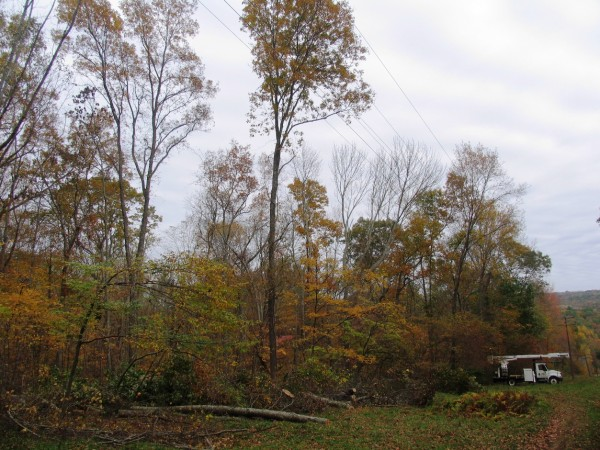Figure 2 Tree Near Wires on Field